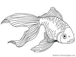 salmon fish coloring page salmon coloring pages salmon coloring pages coloring pages salmon
