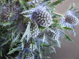 Bulk Wedding Flowers Bulk Discount Flowers Bluethistle Eryngium