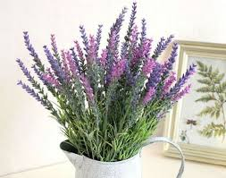 Plants For Bedroom Bedroom Plants That Help You Sleep Much Better Organic Posts