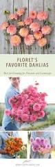 flower garden games online best 25 dahlia garden ideas ideas on pinterest gardening