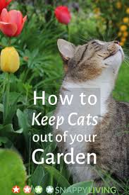 How To Keep Cats Out Of Your Backyard 32 Best Trees Please Images On Pinterest Landscaping Ideas
