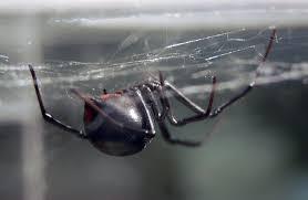 lime green halloween spiders with black background ohio u0027s biting spiders spidersrule