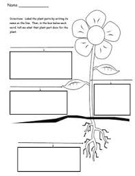 plant parts differentiated instruction tiered worksheets by