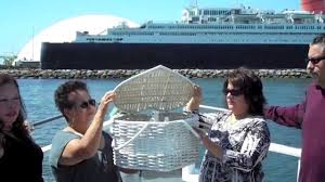 scattering ashes at sea burial at sea 714 903 6599 ash scattering ashes at sea dove