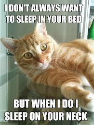 Good Morning Cat Meme - good morning from the cat kayosaurus rex