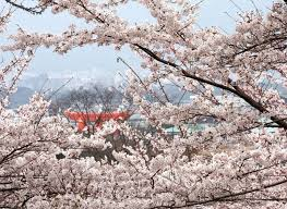 Spring in japan traveling clothing and weather in march may