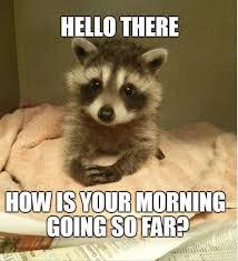 Hello Meme Funny - beware funny animals 24 pics