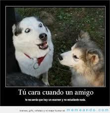 Memes En Espaã Ol Para Facebook - desmotivaciones memes para facebook en español memeando com