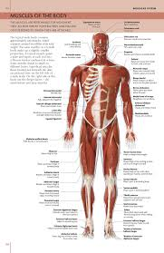 Human Body Anatomy Pics The Concise Human Body Book An Illustrated Guide To Its Structure