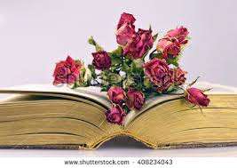 Drying Flowers In Books - dry rose in book stock images royalty free images u0026 vectors