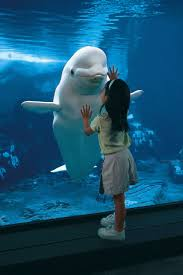 13 best say no to dolphin whale captivity images on pinterest