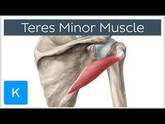 Innervation Of Infraspinatus Http Www Interactive Biology Com In This Video Leslie Samuel