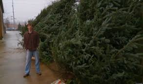 Breezewood Gardens Chagrin Falls - most expensive christmas tree apparently for sale in chagrin falls