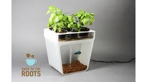 Indoor Vegetable Garden Kit by Home Aquaponics Kit Self Cleaning Fish Tank That Grows Food By