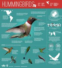 using georgia native plants hummingbird favorites in my garden hummingbirds magic in the air hummingbird westerns and bird