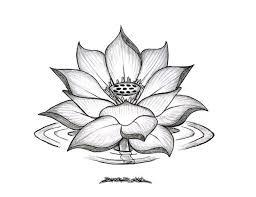 tattoo flower drawings gallery lotus flowers drawings drawing art gallery