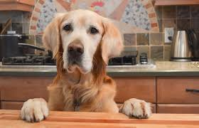 thanksgiving dog three simple thanksgiving marketing ideas for your veterinary