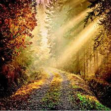 Forest Mural by 1 Wall Forest Path Sun Beam Giant Wallpaper Mural W8p Forest 001