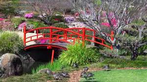 Australian Garden Flowers by Beautiful Gardens Australia U2022 Japanese Beauty Hd1080p Youtube