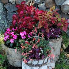 Winter Patio Plants by 8 Tips For Fall And Winter Container Gardening