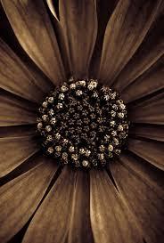 best 25 brown flowers ideas on pinterest flowers petals