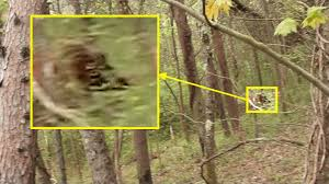 the bigfoot field journal back trail footage bigfoot sketches