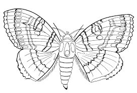 coloring page butterfly and summer