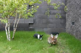 summertime health for rabbits u2013 new mexico house rabbit society