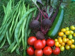 the london vegetable garden september 2010