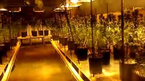 walkthrough of a legal medical marijuana grow room youtube
