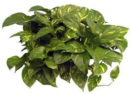 low light plants for office low light indoor plants for houston area office lobby and home