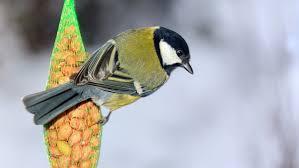 bird feeders can cause bird u0027s beaks to evolve u2014 quartz