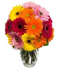Free Vase Amazon Com From You Flowers Stunning Gerbera Daisies 15