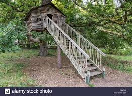 wooden tree house plas newydd country house and gardens anglesey