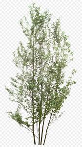 Twig Tree Clip art  color decorative tree png download  8711600