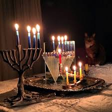 cat menorah observing hanukkah safety with your cats catster