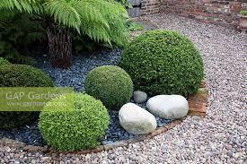gap gardens ornamental gravel garden with clipped buxus box