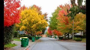 photos colors fall foliage kgw