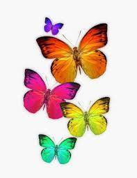 butterfly colourful pattern that i butterfly