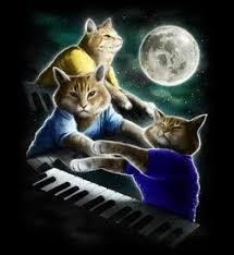 cat playing piano shirt cat musicians pinterest playing piano