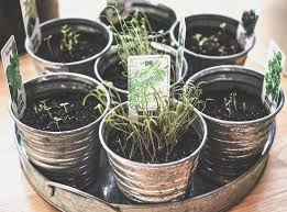 best indoor herb garden kits reviews u0026 top picks urban turnip