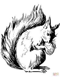 red squirrel eating nut coloring page free printable coloring pages