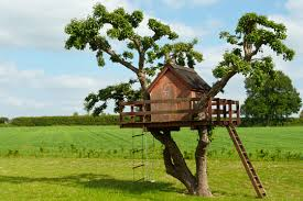best wood for building a tree house handyman talk local