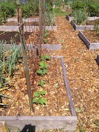 Fall Vegetables Garden by Garden View Fall Vegetable Gardens U2014 The Best In South Texas