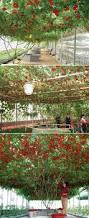 flickr find hanging vegetable garden vegetable garden gardens