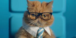 don cat videos and business don u0027t mix in these bright ads for a dual