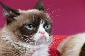 Grumpy Cat Yes Meme - grumpy cat wins 竄ャ570 000 payout in copyright lawsuit 箙 thejournal ie