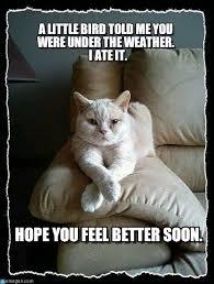 get well soon cat meme extravital fasion cats pinterest gato