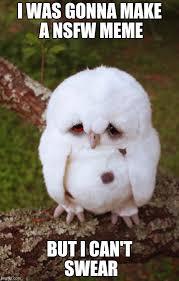 Meme Sad - sad owl meme generator imgflip