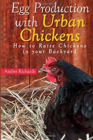 Can You Have Chickens In Your Backyard Egg Production With Urban Chickens How To Raise Chickens In Your